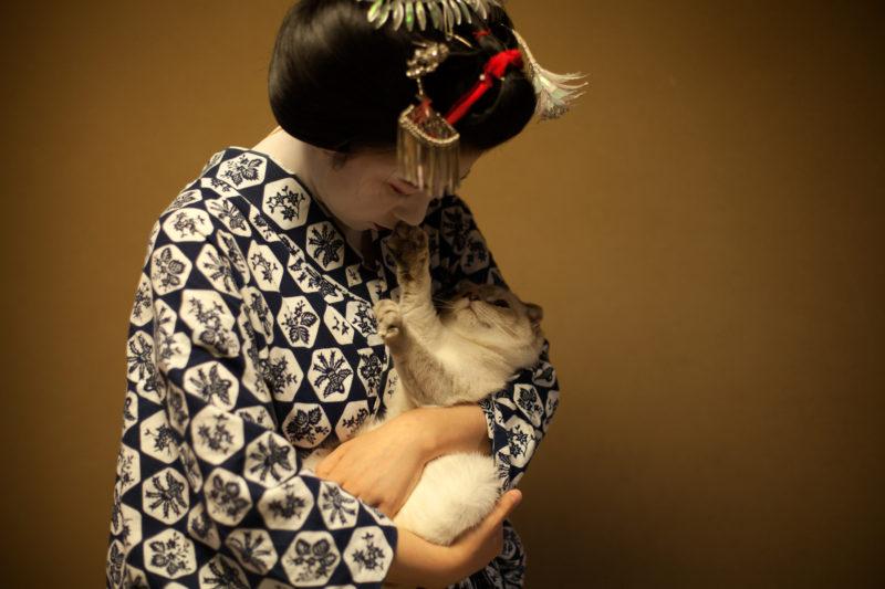 Neko. De kat in de Japanse kunst | Leiden @ Japanmuseum SieboldHuis | Leiden | Zuid-Holland | Nederland