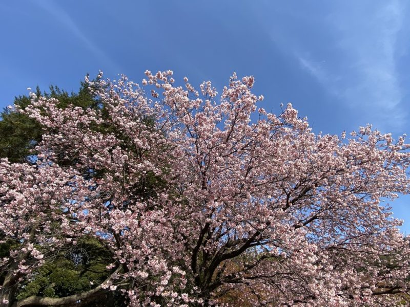 Japanse Tuin | Hasselt (BE) @ Hasselt | Vlaanderen | België